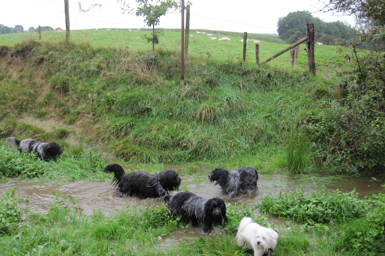 schapendoes wandeling met janneke 2